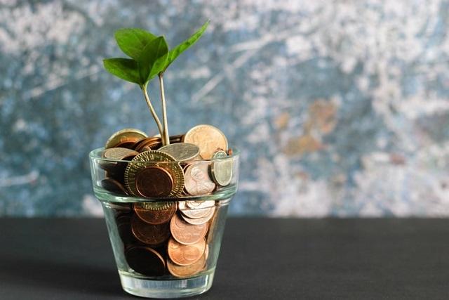 お金に植えた植物