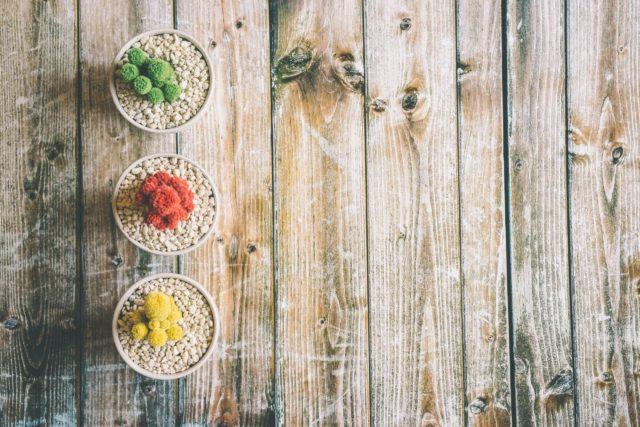 カラフルなサボテンの鉢植え