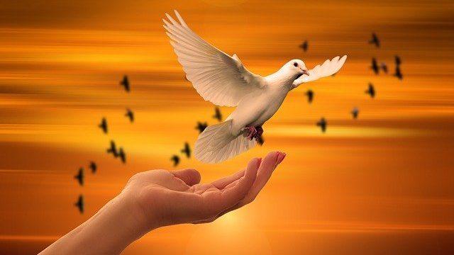 手から飛び立つ白い鳩